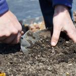 Compost For Better Boston Soils