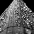 Water droplets form on the surface of a leaf. Image courtesy of Pxhere.org
